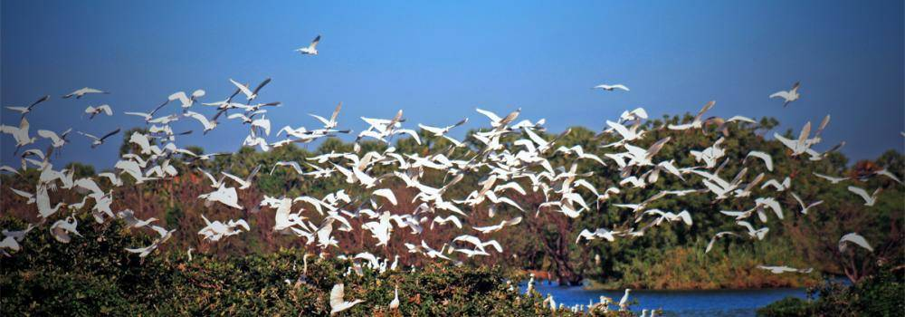 Bird flock in wetlands